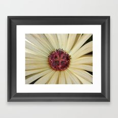 livingstone daisy Framed Art Print