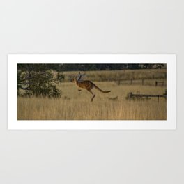 Kangaroo on the move Art Print