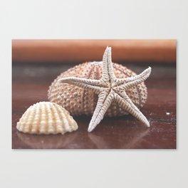 seashells 3 Canvas Print
