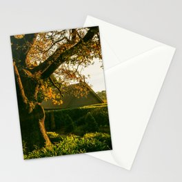 Mount Wilson, Blue Mountains, Sydney Stationery Cards
