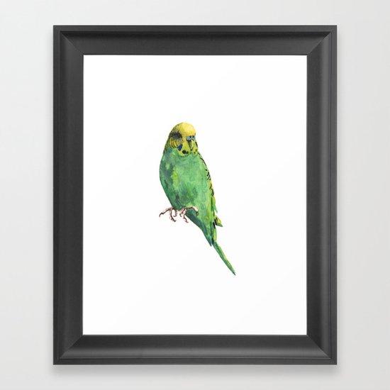 Budgie, parakeet, budgerigar,bird art, budgie painting Framed Art Print