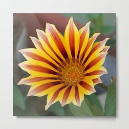 Single Flower Close Up Gazania Red Stripe Metal Print