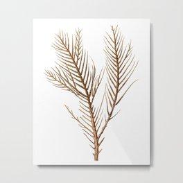 Sea Coral No.10 Antique Natural History Print. Metal Print