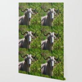 Portrait of A Horned Goat Grazing Wallpaper