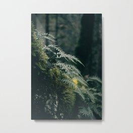 Ferns VII Metal Print