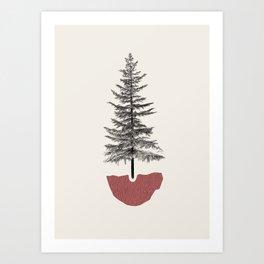 Fir Pine Art Print