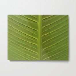 Leaf 3 Metal Print