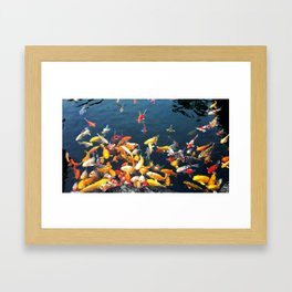 Colorful carp in the pond Framed Art Print