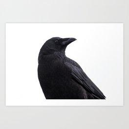 Seattle Crow / 1 Art Print