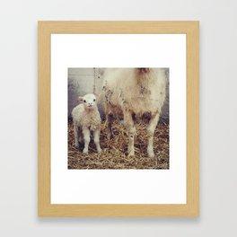 Sheep #2 Framed Art Print