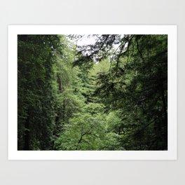Transparent Forest (crop) Art Print