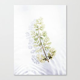 Floating Branch Canvas Print