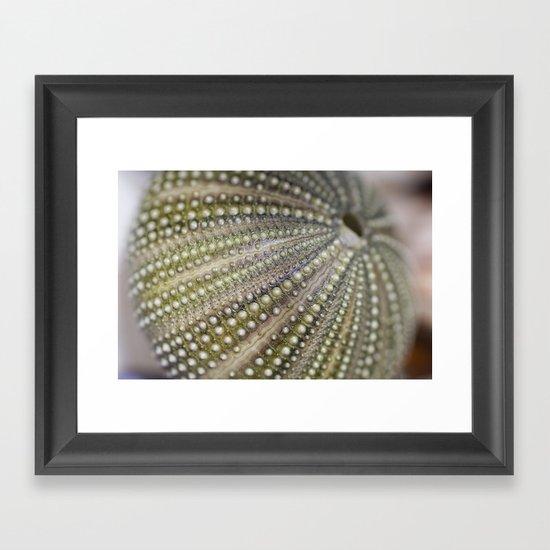 Urchin Texture Framed Art Print
