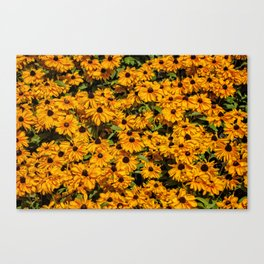 A field of flowers Canvas Print