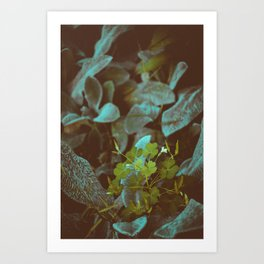 look into nature for signs. Art Print