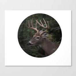 Hudson Valley Deer Canvas Print