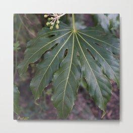 Big Leaf Metal Print