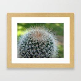 Cactus Cynara Cardunculus Framed Art Print
