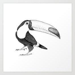 Ripley the Toucan II Art Print