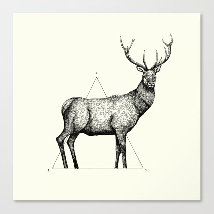 'Wildlife Analysis II' Canvas Print