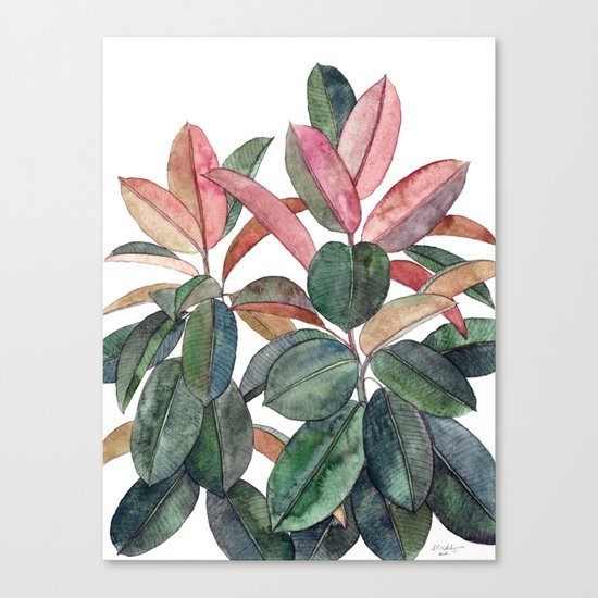 Rubber Plant Canvas Print