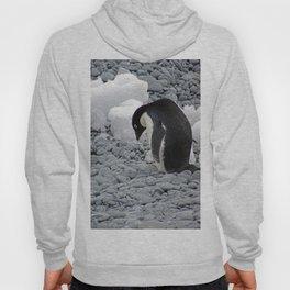 Adelie Penguin Hoody
