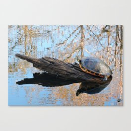 Turtle at the Slough Preserve Canvas Print