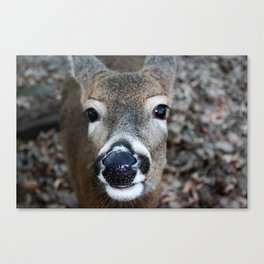 Woodland Companion Canvas Print