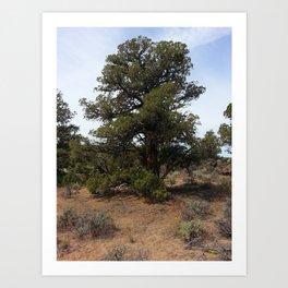 Juniper Tree Art Print