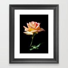 Rose of St. James Framed Art Print