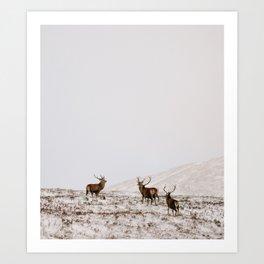 Highland Stags Art Print