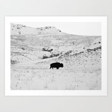 Black and White Bison Art Print