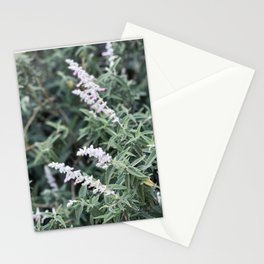 Flowering Sage Stationery Cards