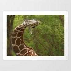 C Giraffe Art Print
