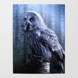 Winter Owl-eye Poster