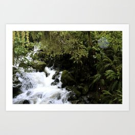 Road to Milford Sound Art Print
