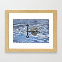 Proud mute swan Framed Art Print