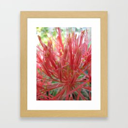 Blood Lily Framed Art Print