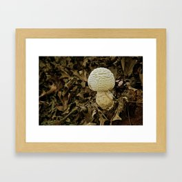 Fall Blooms Framed Art Print