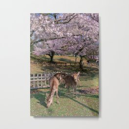 Sakura and deers Metal Print