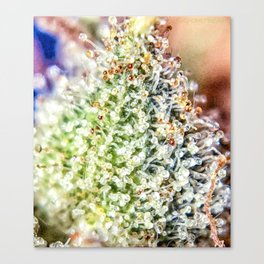 Top Shelf Bud Diamond OG Strain Trichomes Close Up View Canvas Print