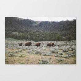 Bison III Canvas Print