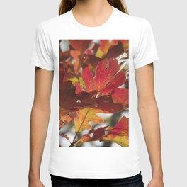 Oak Glow - Autumn Colors T-shirt