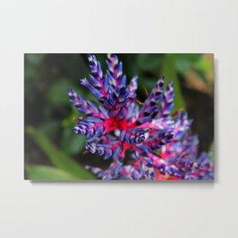 Bromeliad I Metal Print