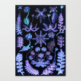 Haeckel's Sea of Darkness Canvas Print