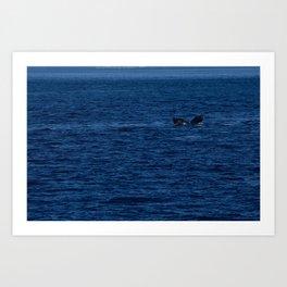 Humpback in Chatham Strait Art Print