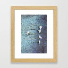 Daisies in a row Framed Art Print