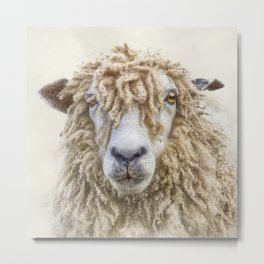 Leicester Longwool Sheep Metal Print