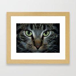 color cat Framed Art Print