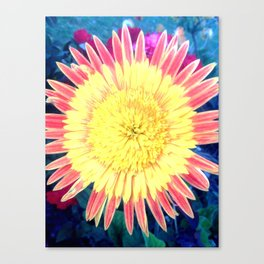 Colourful Daisy photography by Michelle Steers Canvas Print